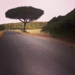 estrada_sudoeste_costa_vicentina